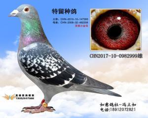 CHN2017-10-0982999