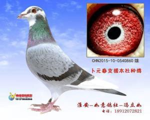 CHN2015-10-0540860