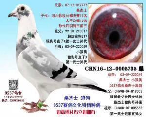 CHN16-12-0005735