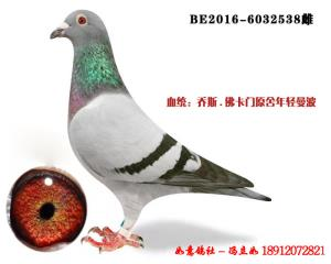 BE2016-6032538