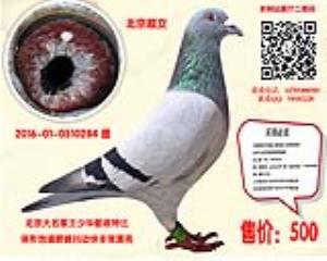 北京名家王少华