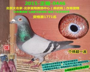 北京喜翔赛鸽中心-正明特比 雄