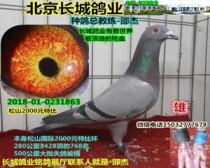 北京长城鸽业-邵杰 松山2000特比 雄