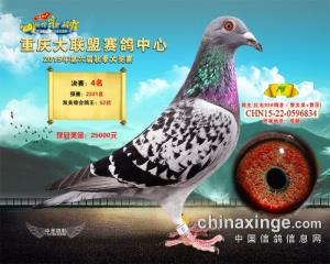 重庆大联盟公棚15年决赛 4名