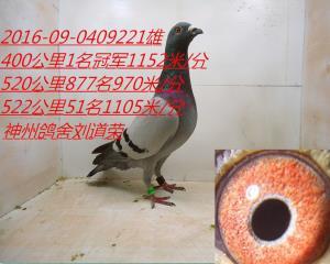 上海名家刘道荣400公里冠军
