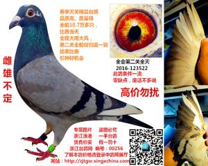 已售贵州遵义 春季新和顺灭关 编号:00256