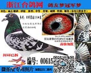 15年冬季下船朋友寄售日本鸽  编号:00615