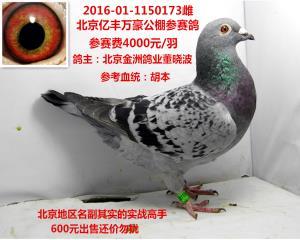 北京金洲鸽业董晓波送亿丰万豪