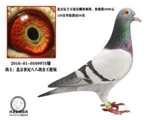 北京世纪八八鸽舍送亿丰万豪