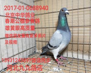 北京中华鸽业